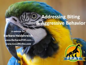 biting-parrot-webinar-promo