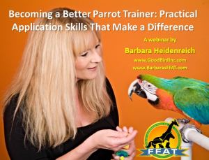 practical-parrot-webinar-promo