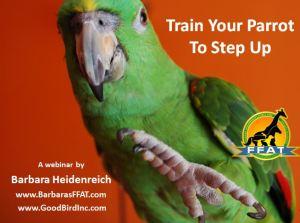 step-up-webinar-promo