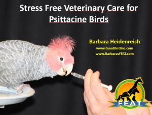 stress free vet